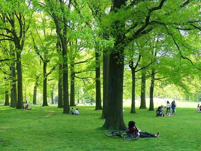 Central Park NY (1)
