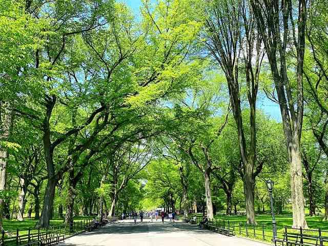 Central Park NY (5)