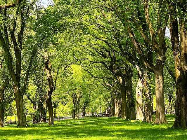 Central Park NY (8)