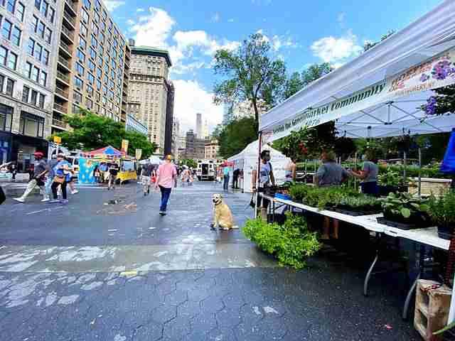 Union Square Green Market (1)