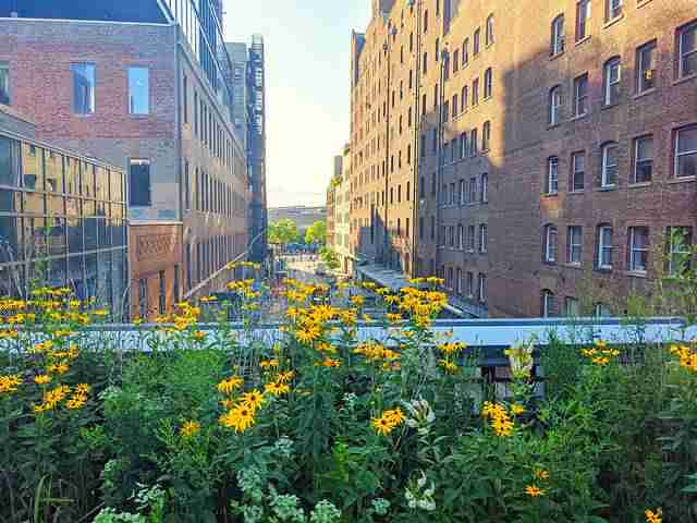 The High Line (25)