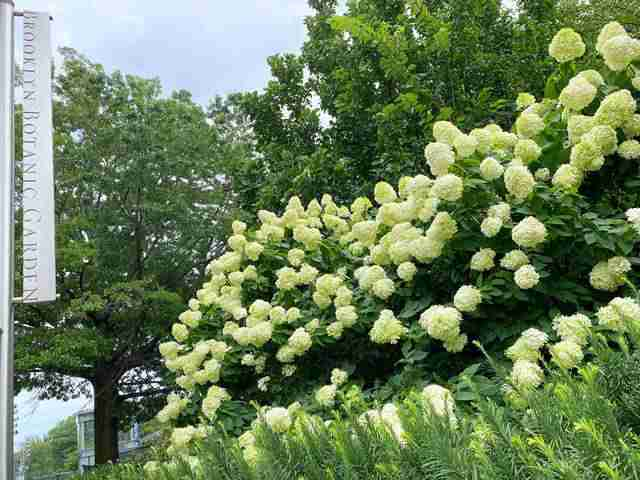 Brooklyn Botanic Garden (1)