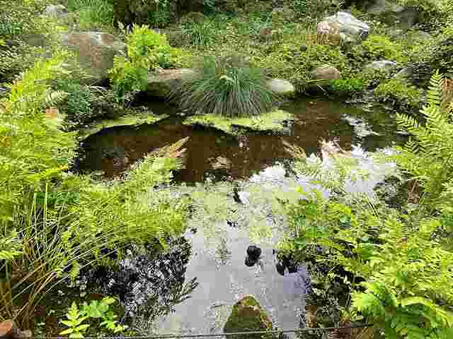 Brooklyn Botanic Garden (31)