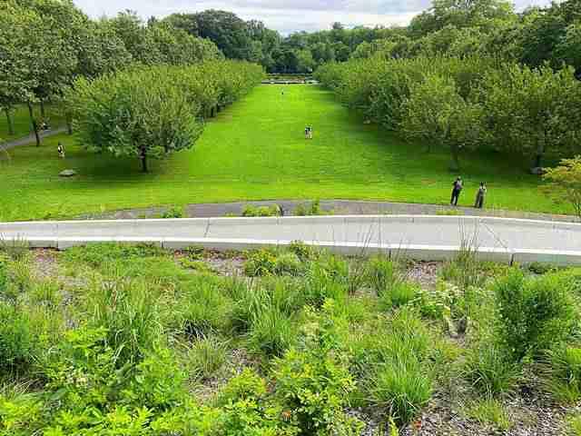 Brooklyn Botanic Garden (4)
