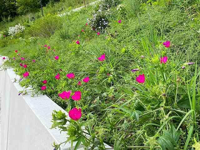 Brooklyn Botanic Garden (6)