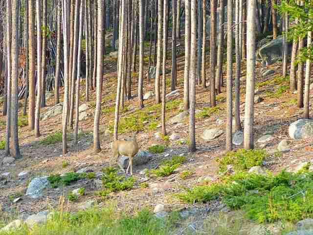 Rocky Mountain National Park (17)