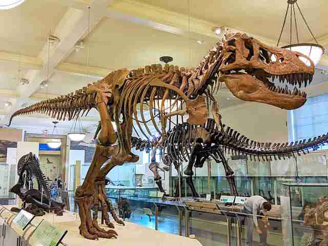 American Museum of Natural History (11)