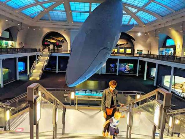 American Museum of Natural History (4)