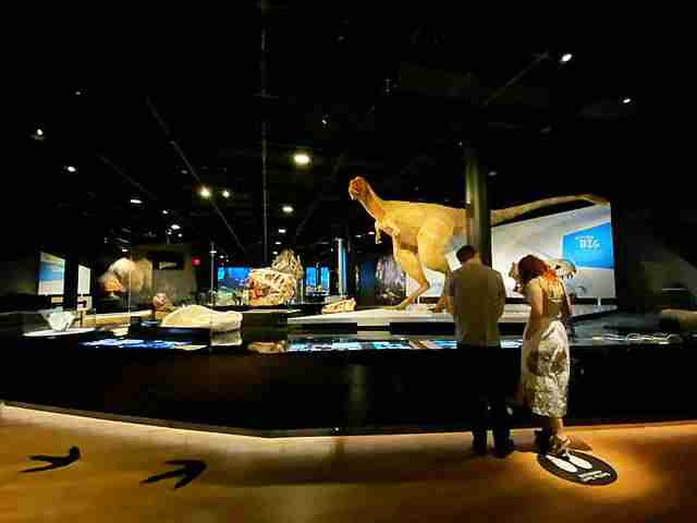 American Museum of Natural History (42)