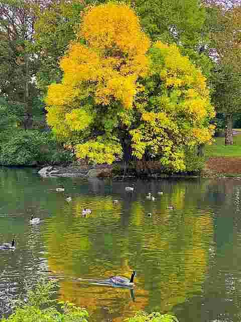 Central Park (9)
