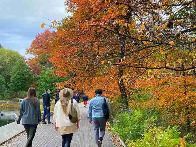 New York Botanical Garden (1)