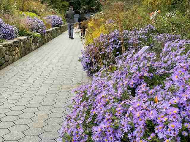New York Botanical Garden (10)
