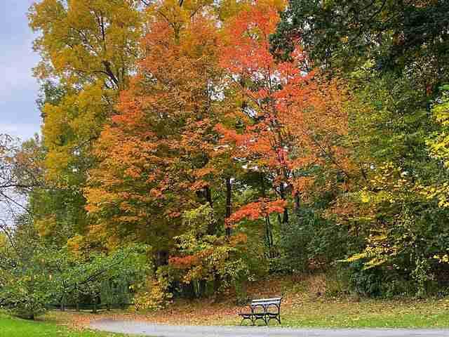 New York Botanical Garden (15)