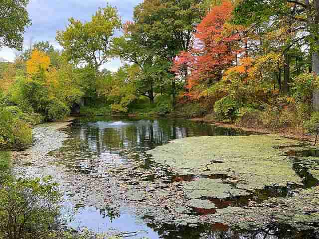 New York Botanical Garden (16)