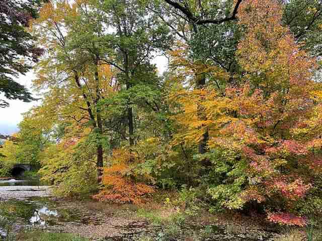 New York Botanical Garden (17)