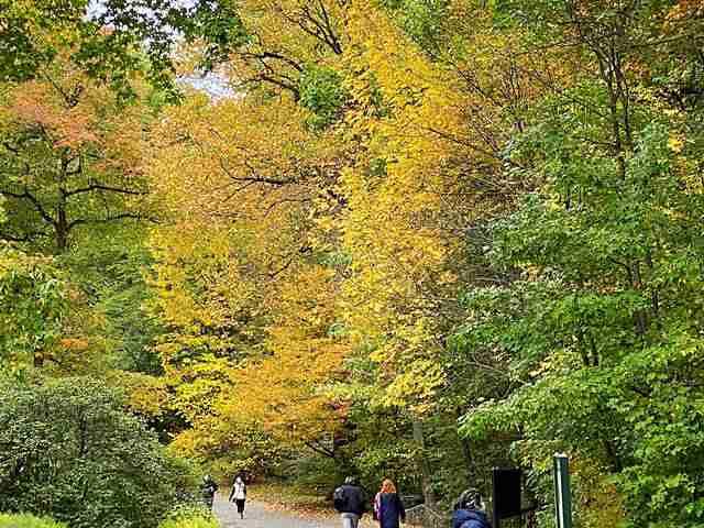New York Botanical Garden (27)