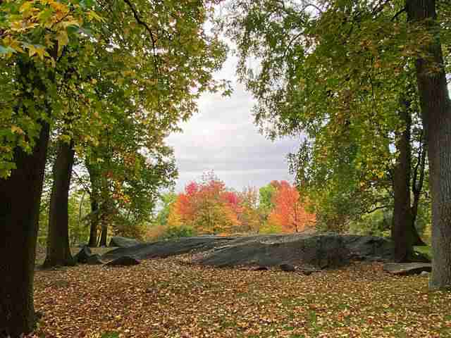 New York Botanical Garden (28)