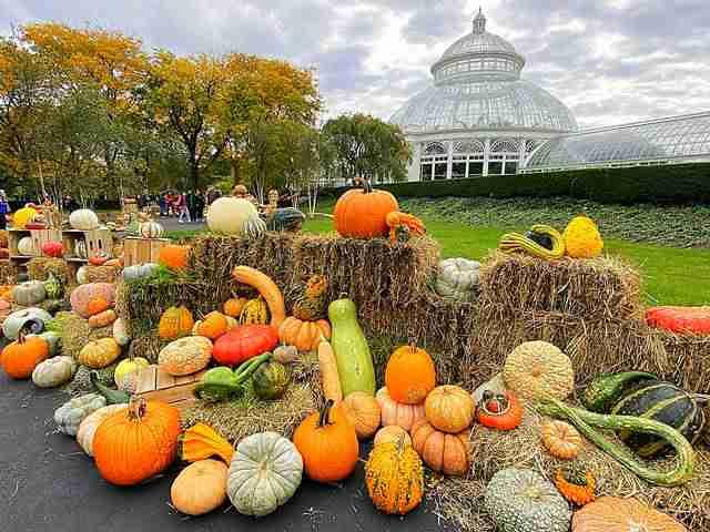 New York Botanical Garden (3)