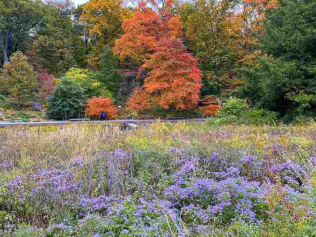 New York Botanical Garden (4)