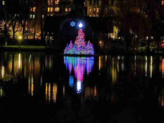Central Park Christmas Tree (1)