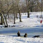 Central Park (24)