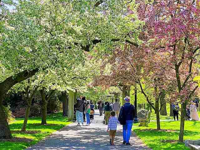 Brooklyn Botanic Garden (10)