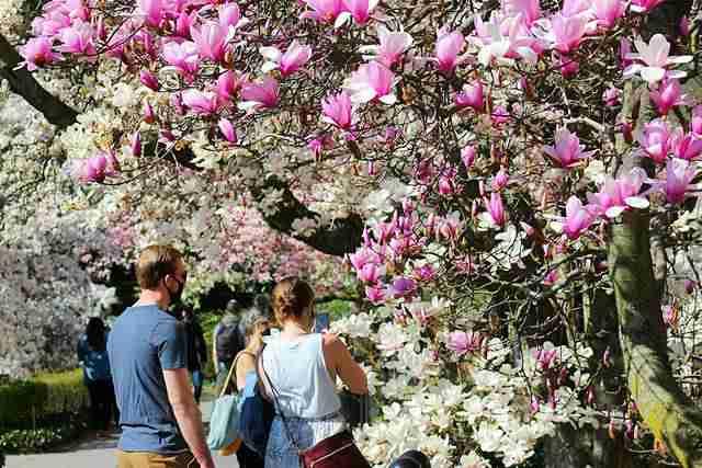 Brooklyn Botanic Garden (12)