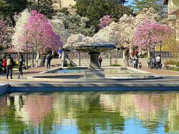 Brooklyn Botanic Garden (13)
