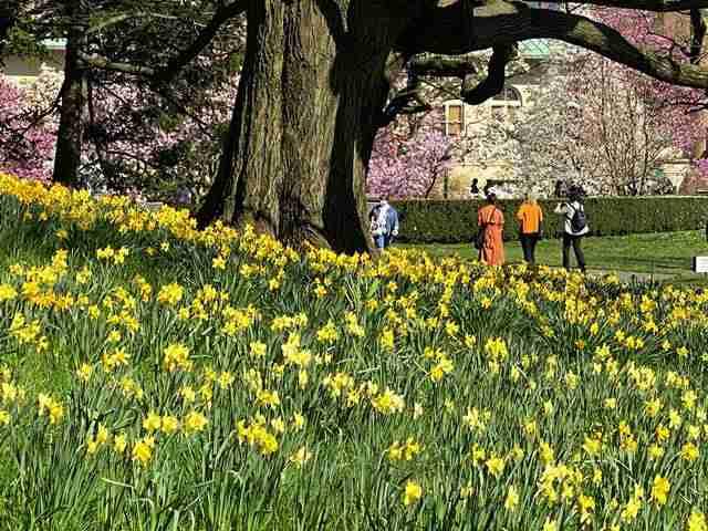 Brooklyn Botanic Garden (14)