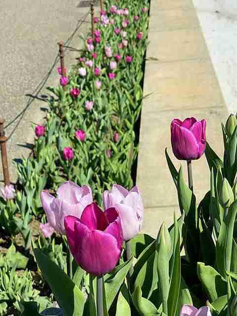 Brooklyn Botanic Garden (15)
