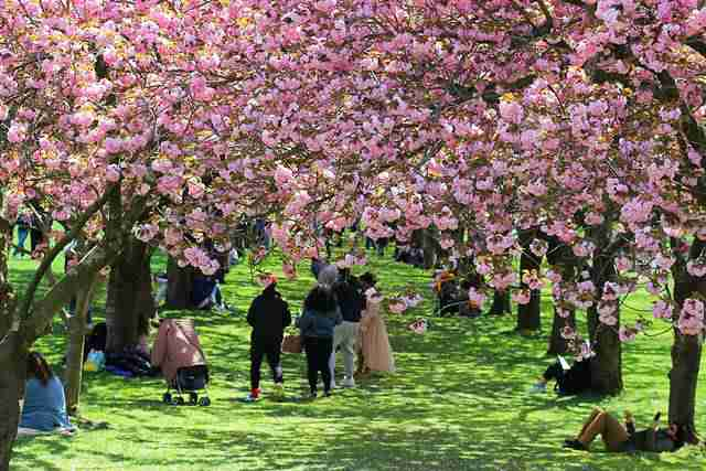 Brooklyn Botanic Garden (3)