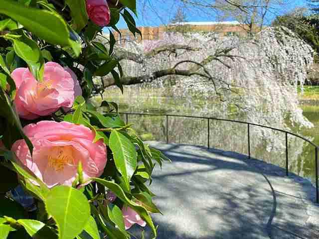 Brooklyn Botanic Garden (5)