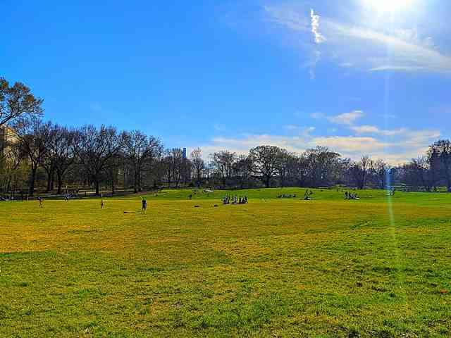 Central Park (17)