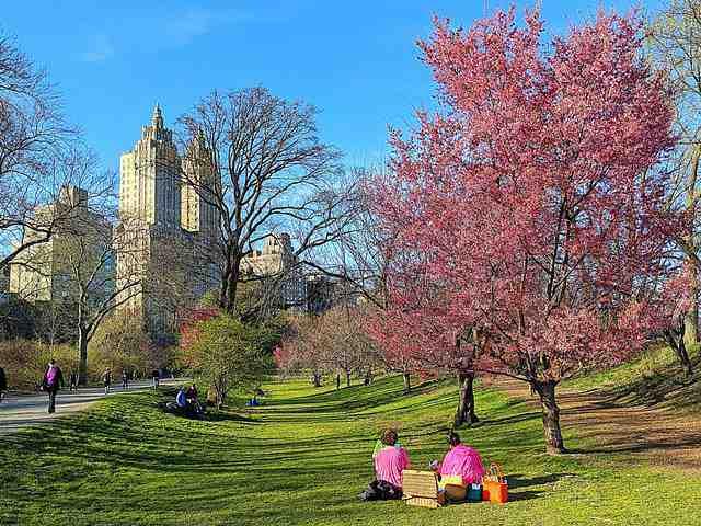 Central Park (18)