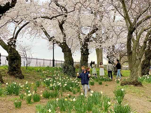 Central Park (22)