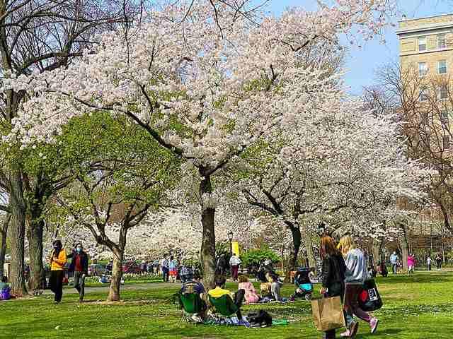 Sakura Park (1)