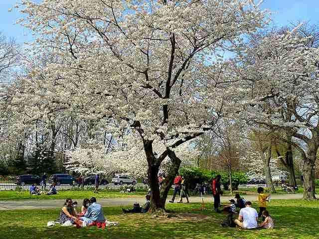 Sakura Park (2)
