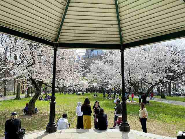 Sakura Park (3)