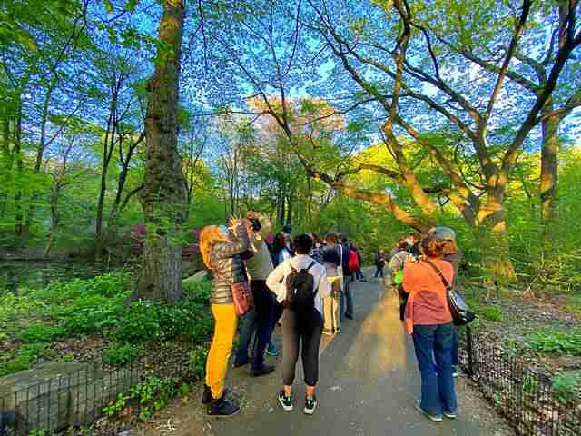 Central Park (32)