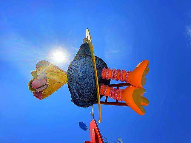 Big Bird MET (7)