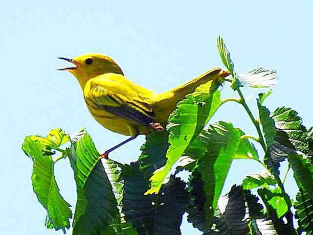 Bird (11)