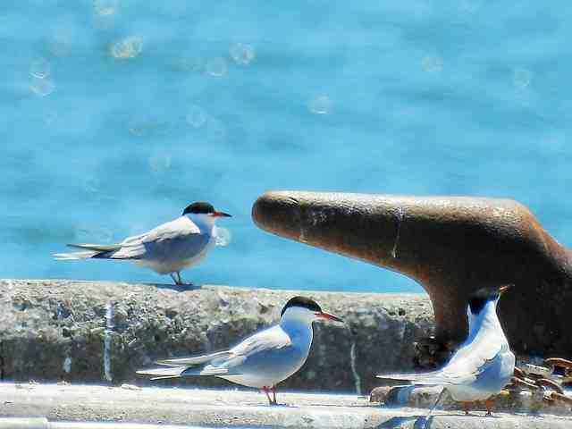Bird (15)