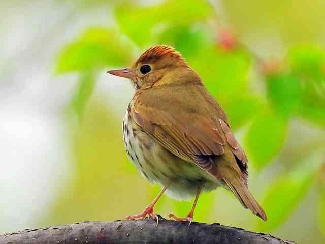 Bird (22)