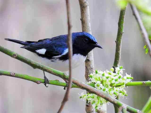 Bird (23)