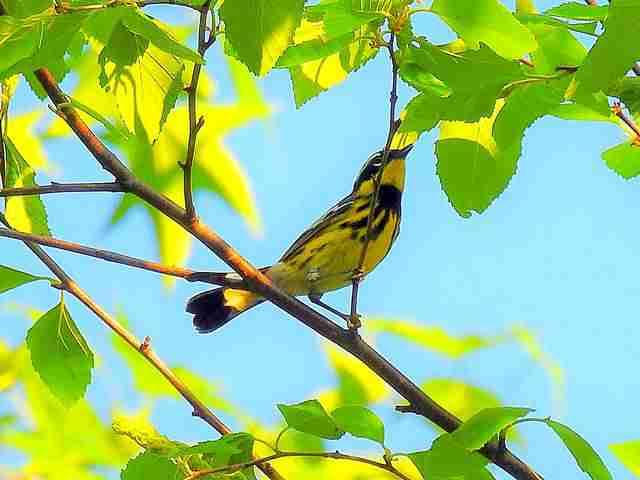 Bird (30)