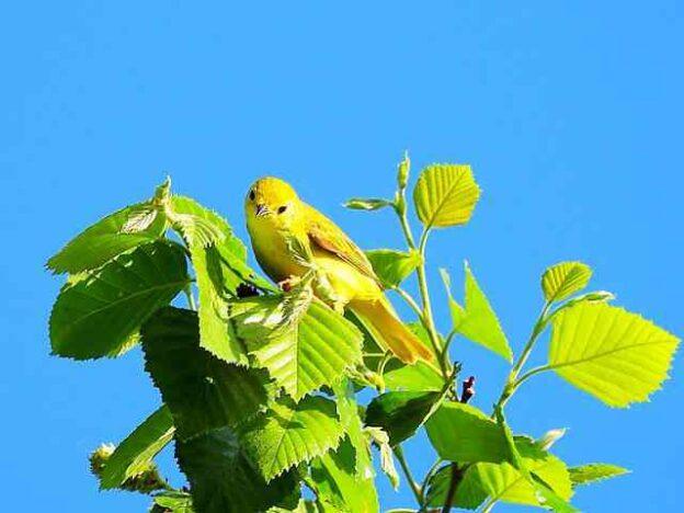 Bird (32)