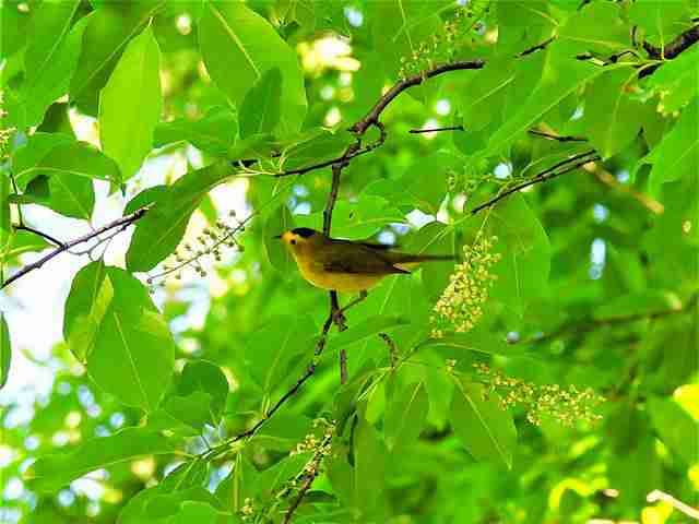Bird (34)
