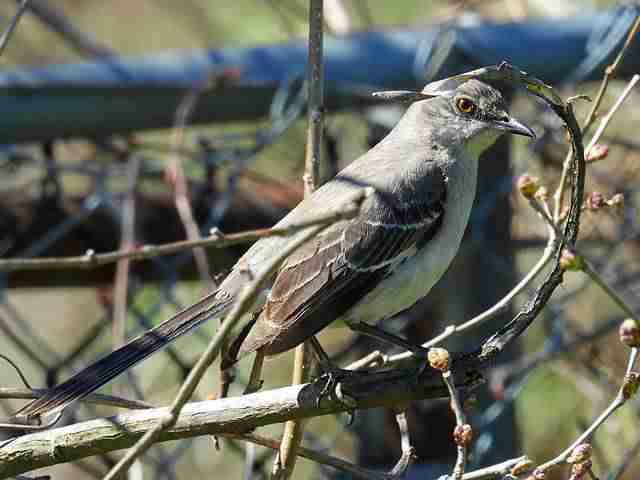 Bird (53)