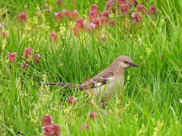 Bird (54)