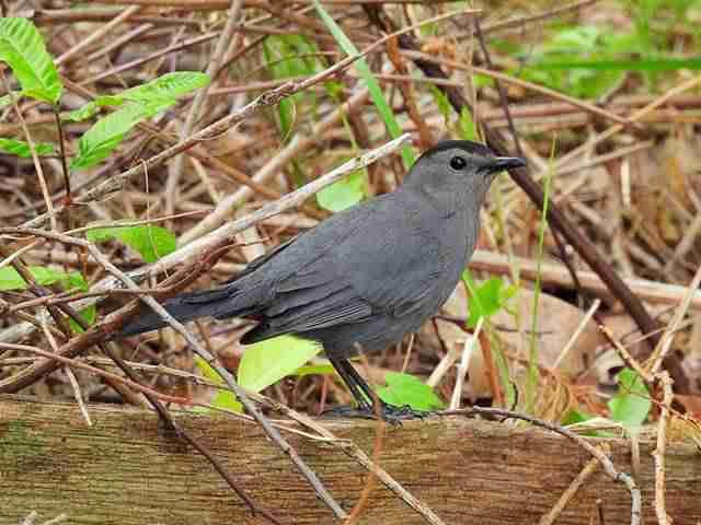 Bird (55)